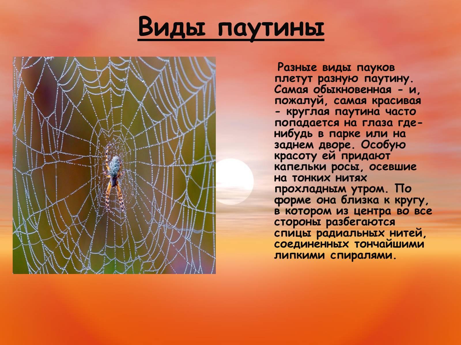 Рассказы о пауках и картинки пауков