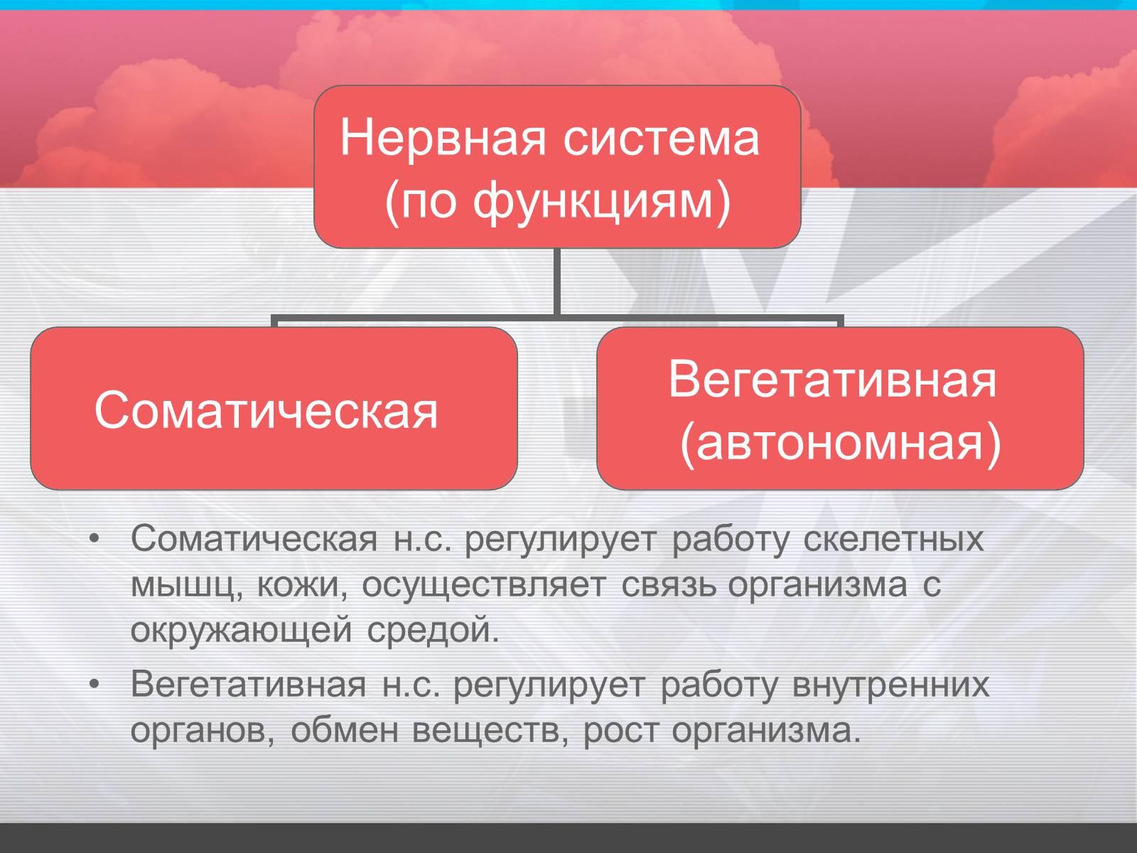 Схема деления нервной системы на отделы