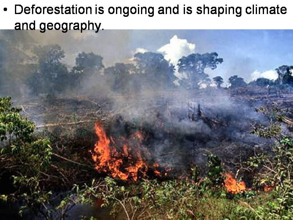 is provigil harmful effects of deforestation