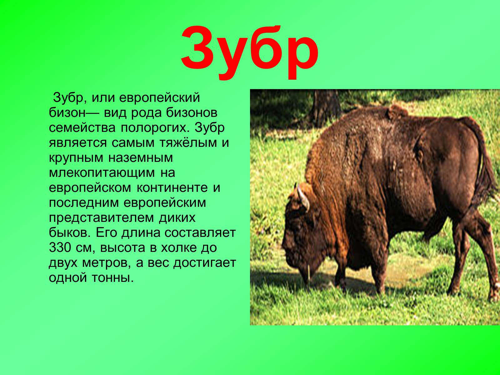 Фото и описание животного россии член