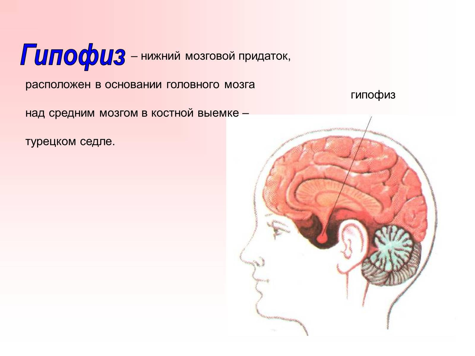 бетон какие гормоны вырабатывает головной мозг можете