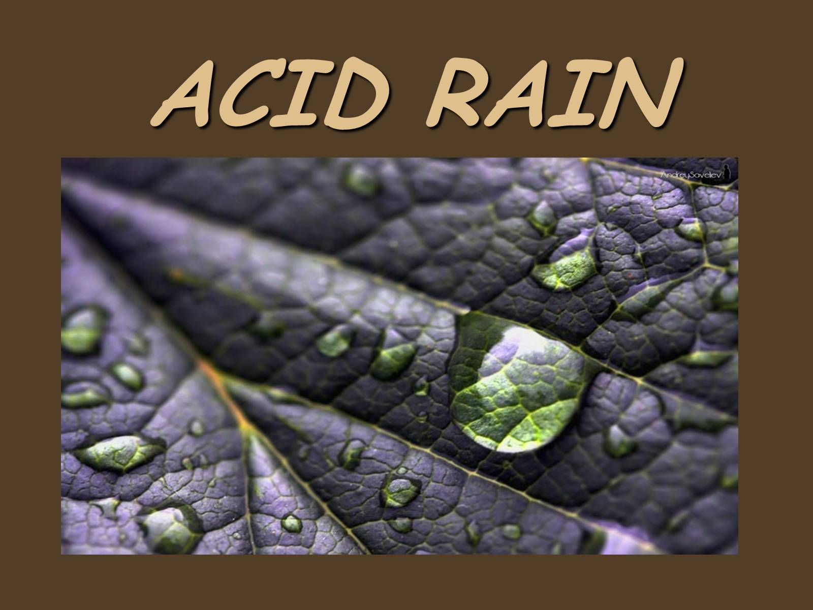 one world essay on acid rain