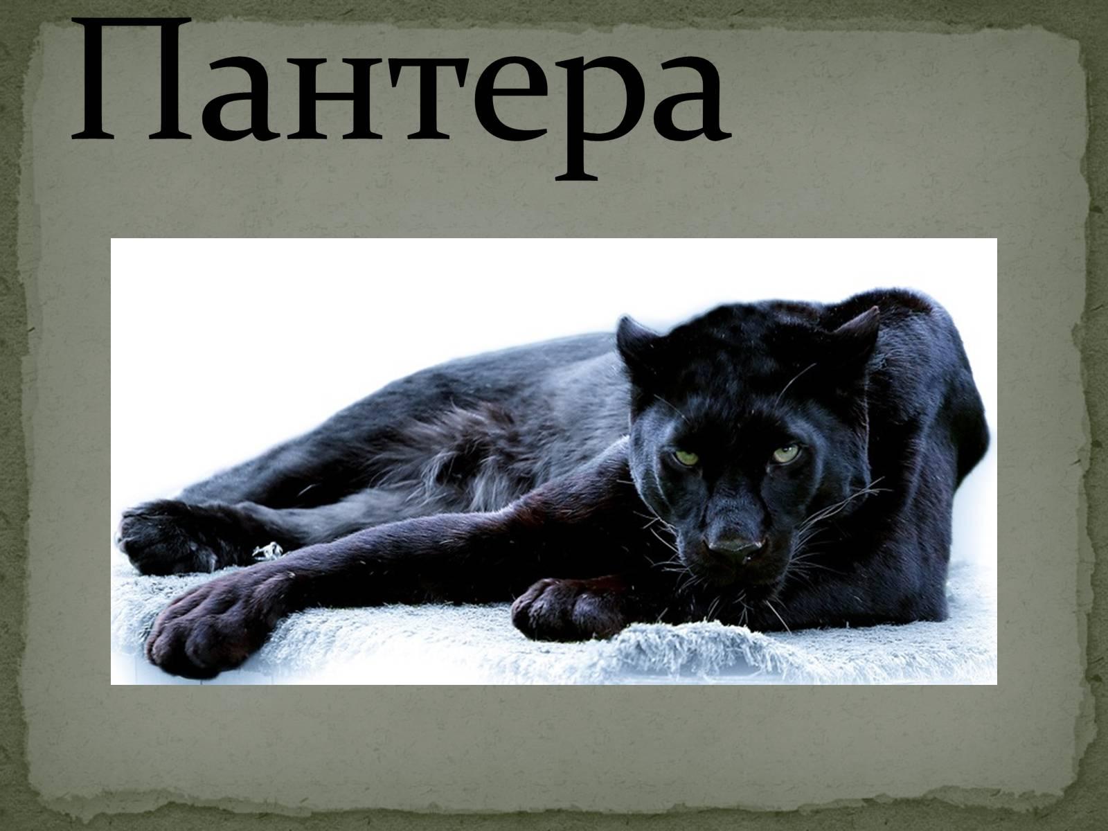 Картинка пантера с надписями, картинки танком открытки