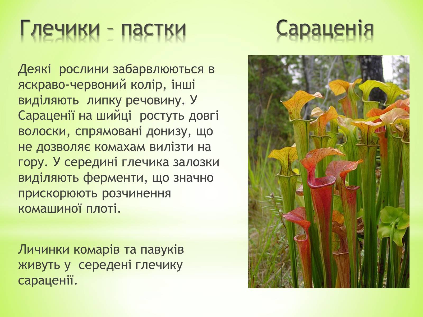 реферат на тему рослини хижаки з картинками разновидности его