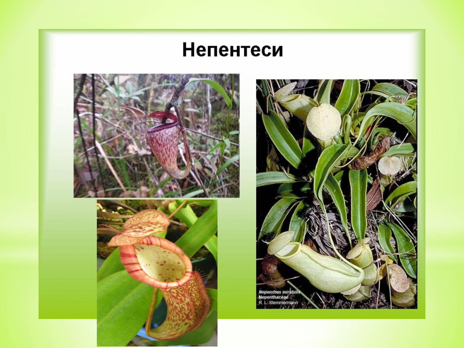 постельного реферат на тему рослини хижаки з картинками девушку