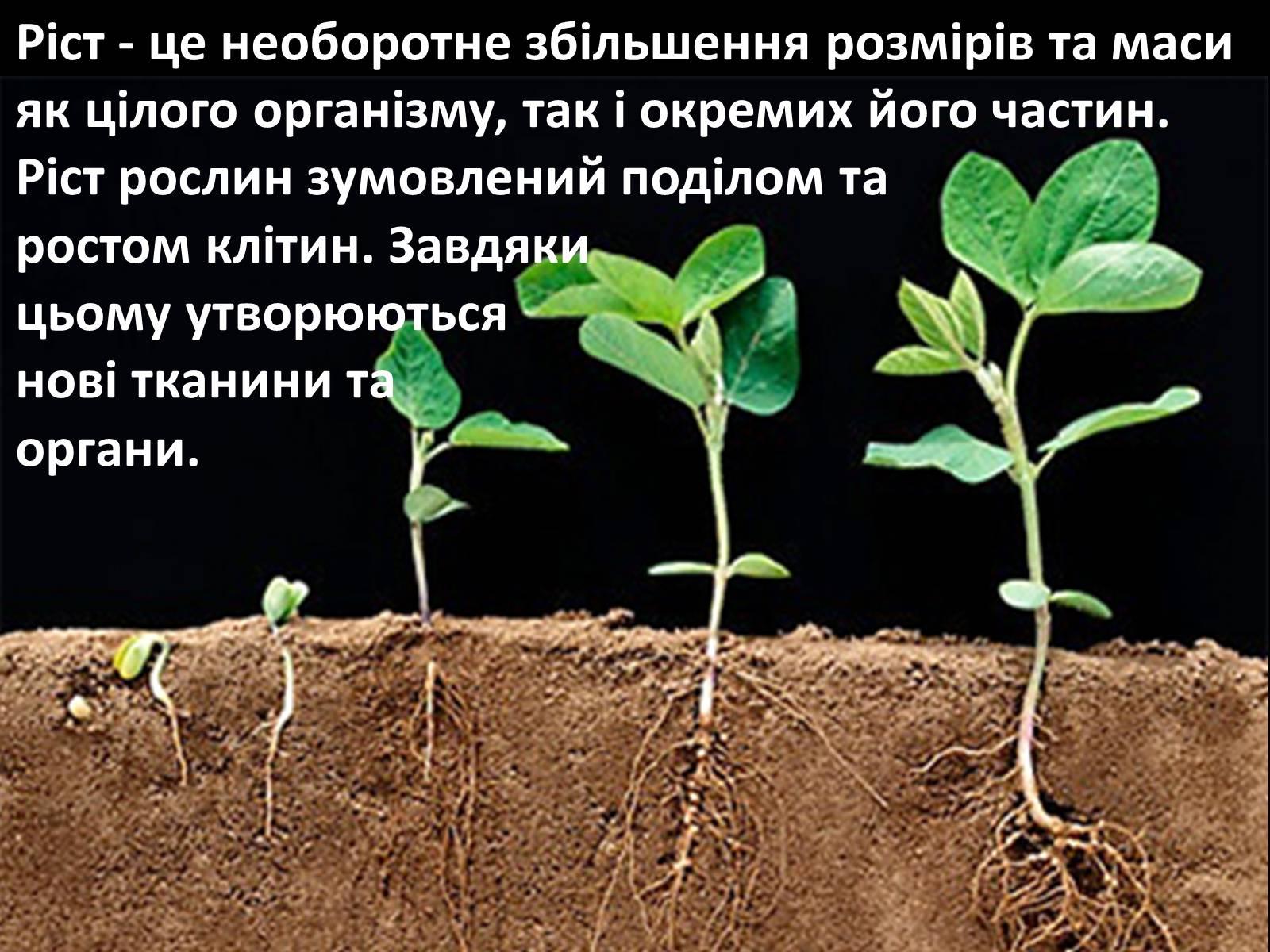 презентація на тему життєвий цикл рослин