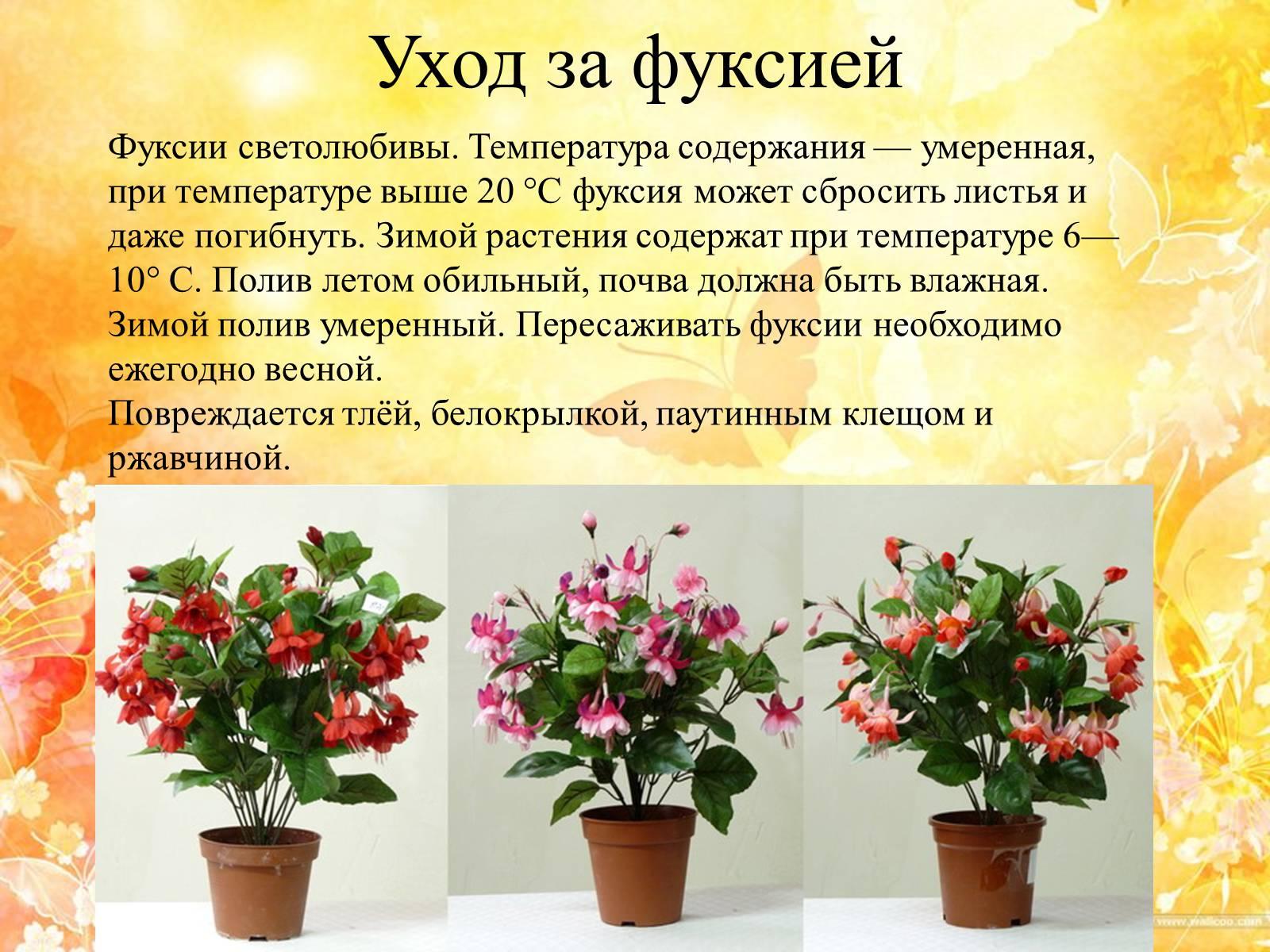 Название цветов комнатных и их размножение