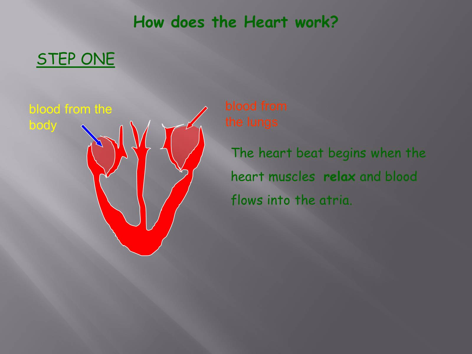 how the heart works - HD1600×1200