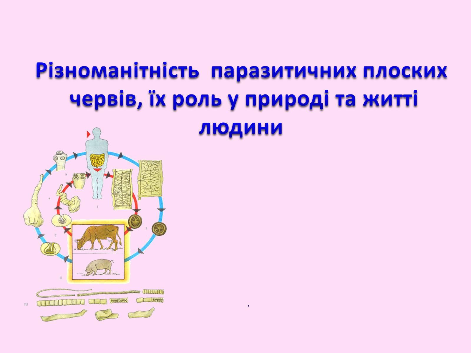 Презентація паразитичні черви захворювання людей