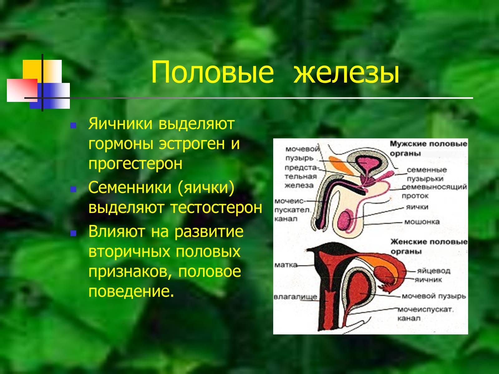 Презентація на тему Регуляция процессов жизнедеятельности организма - презентації з біології GDZ4YOU