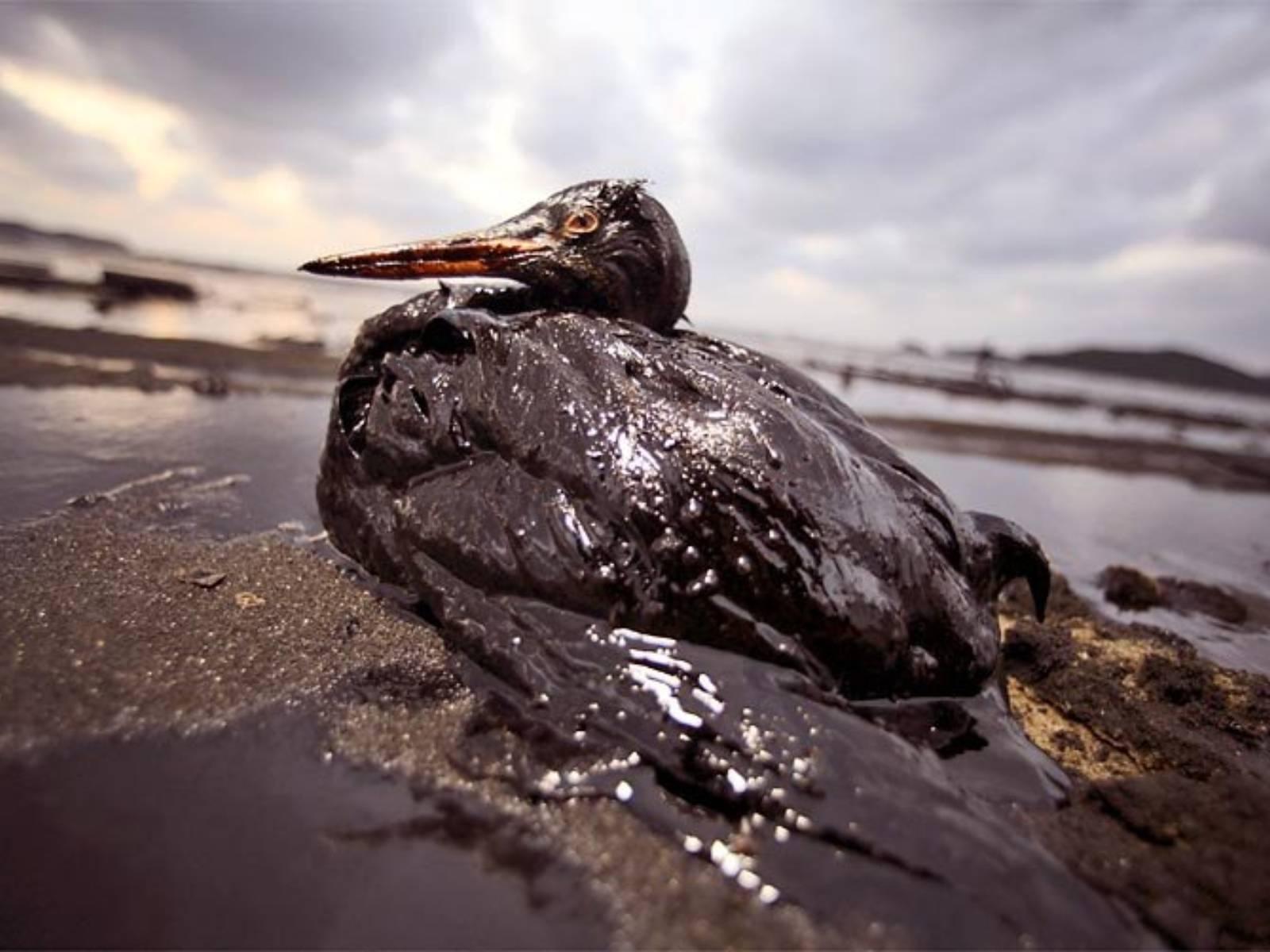 Fotos de derrame de petroleo en monagas 11