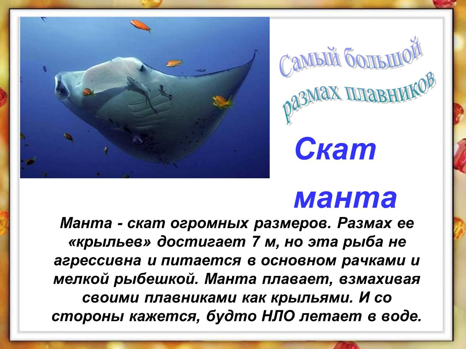автомобиль интересные факты о рыбах с картинками самостоятельно установить причину