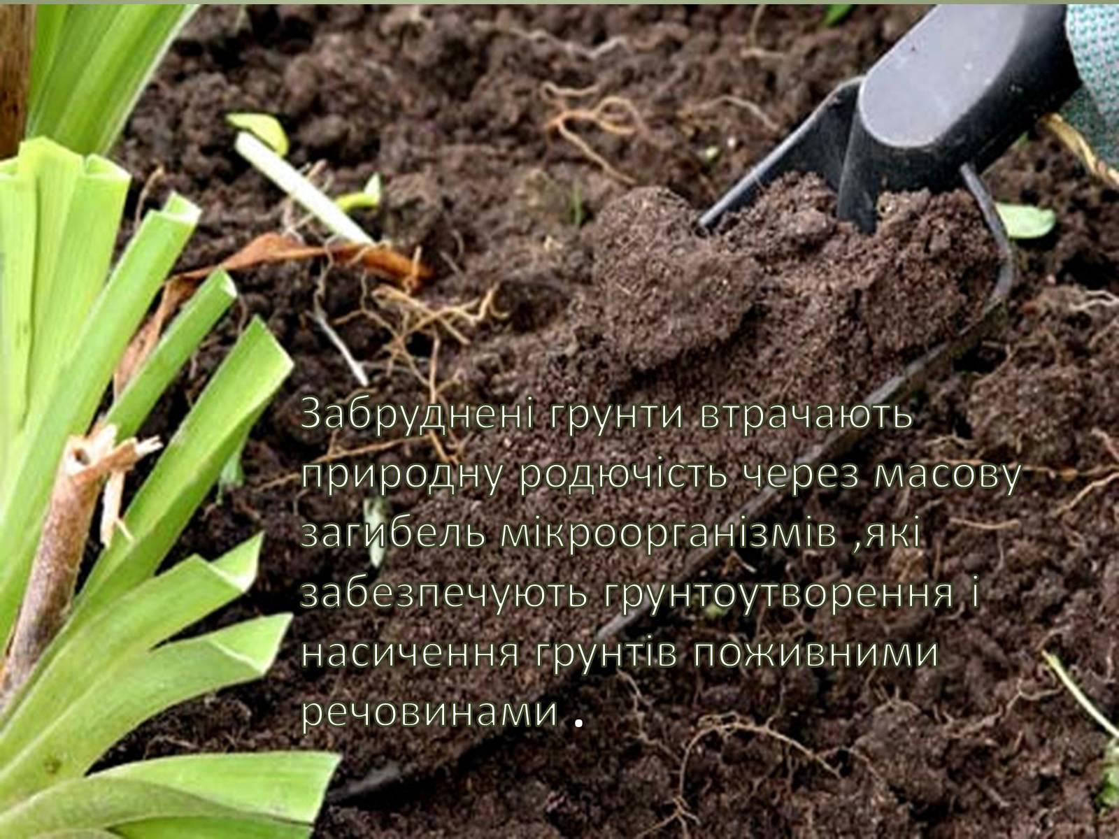 Как сделать суглинистую землю плодородной
