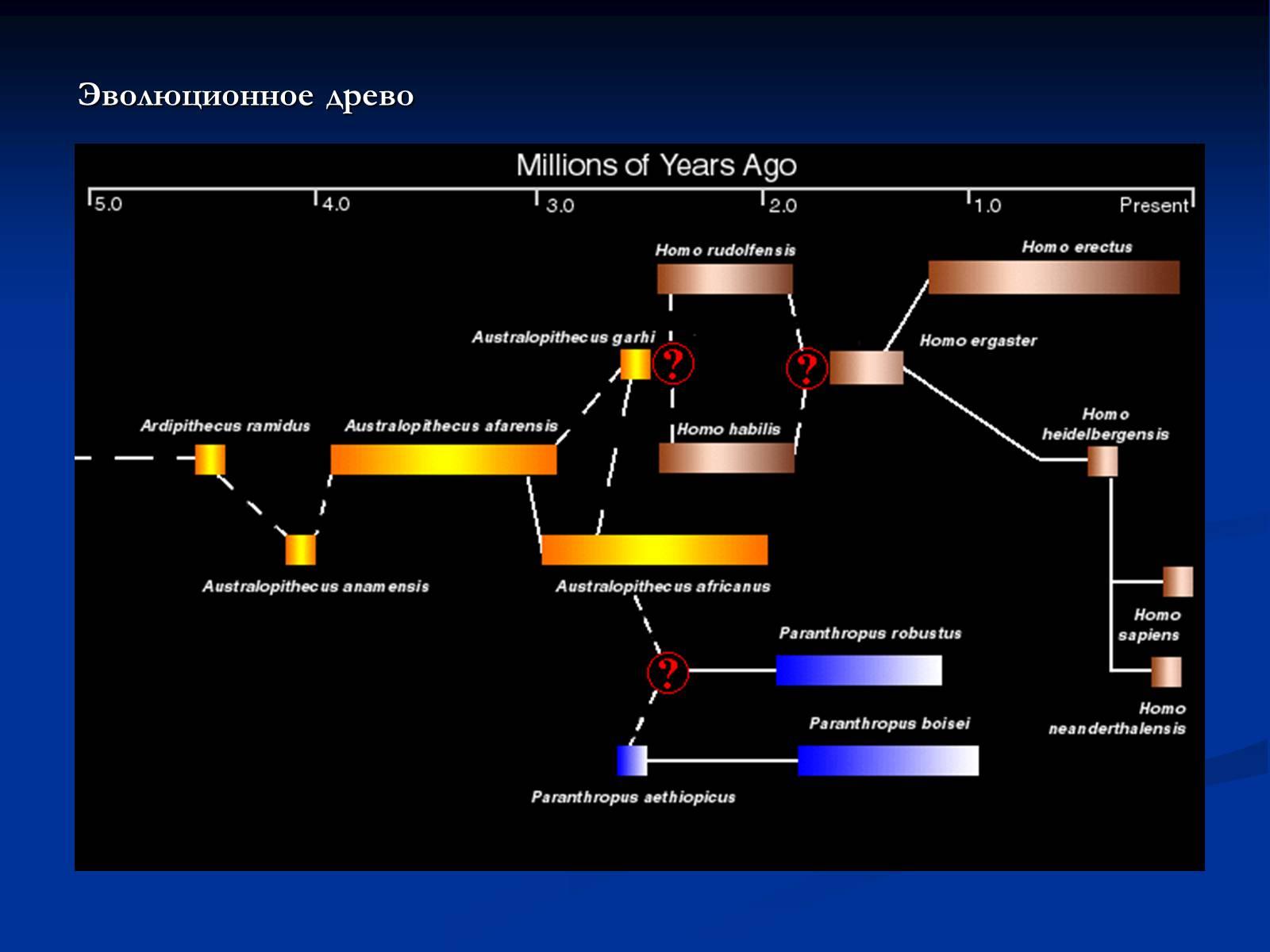 Эволюционное древо человека схема