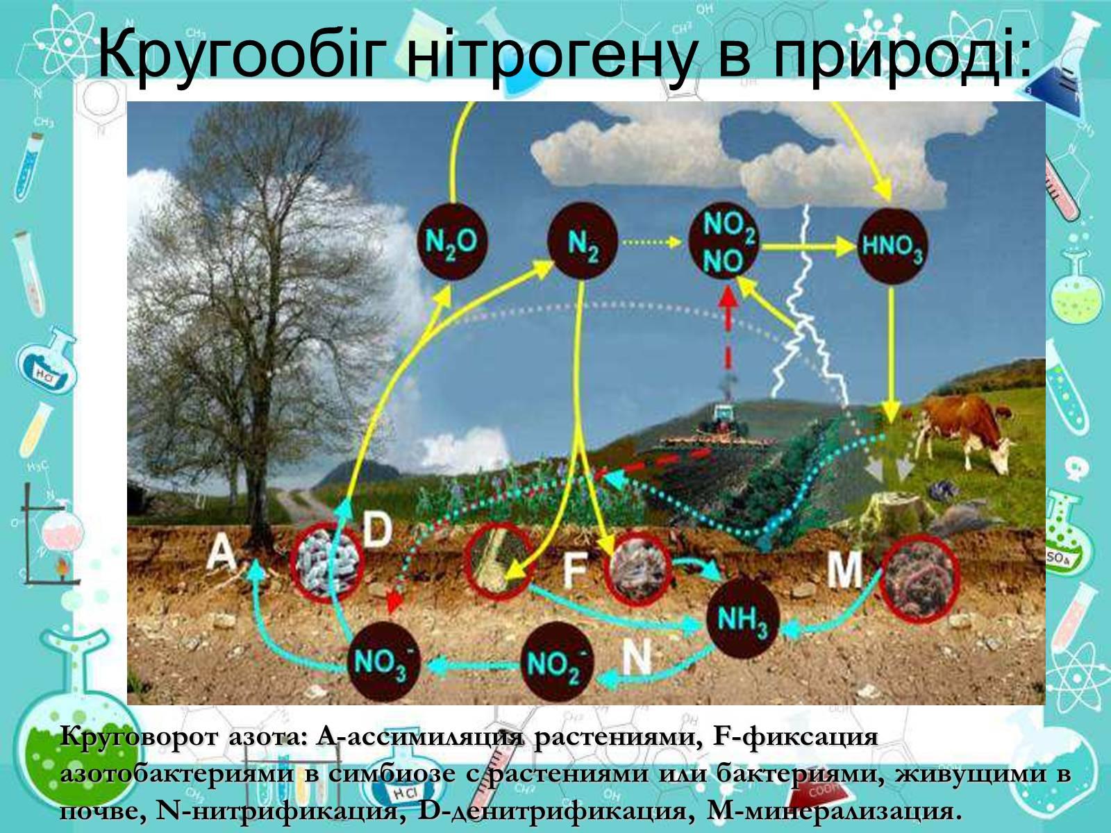 Схема биогеохимических циклов азота