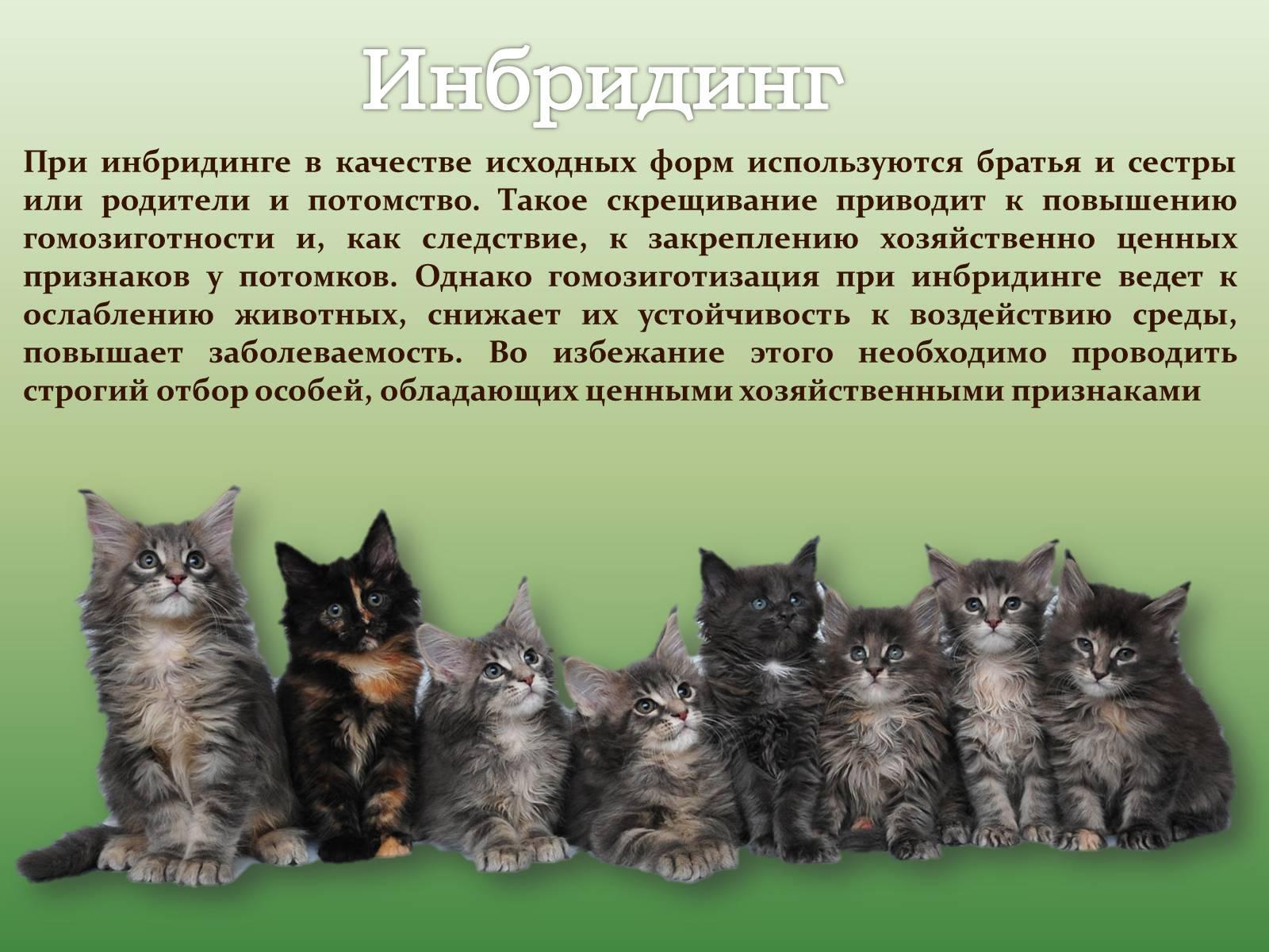 Селекция животных на устойчивость к болезням реферат 7547